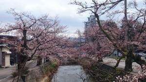 2015.4.8 長岡 柿川通り