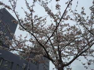 2015.4.6新潟